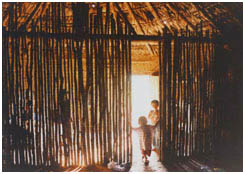guarani-indians